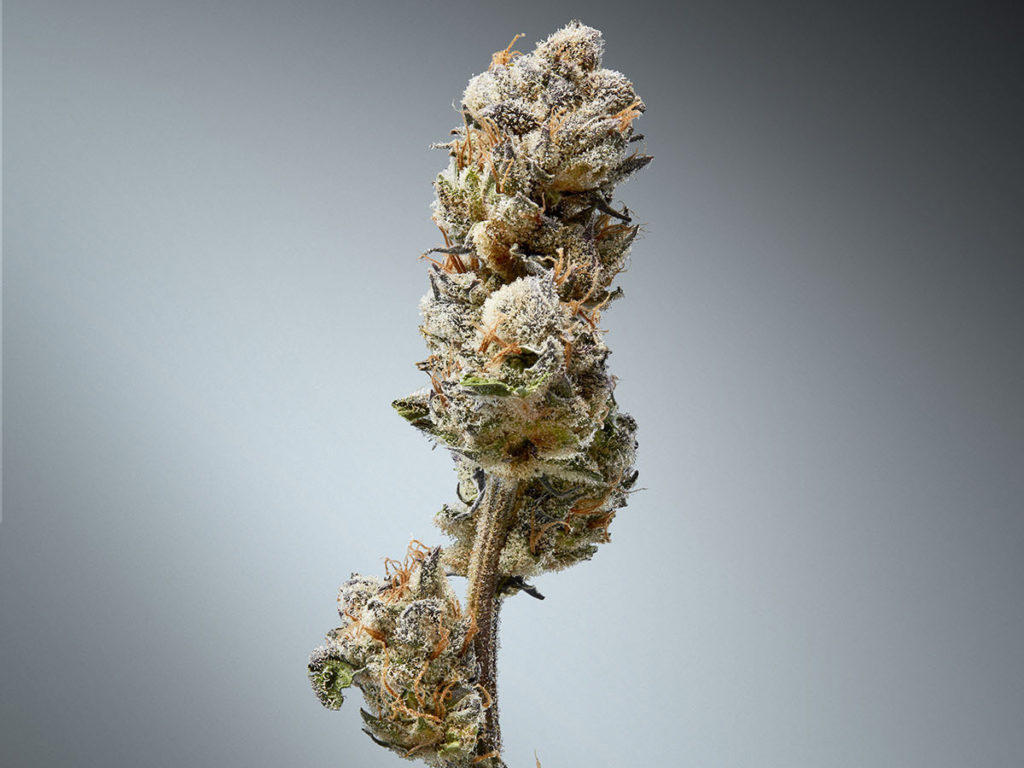 hemp flower for sale